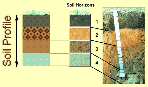 List of synonyms and antonyms of the word soil horizons for Soil is an example of