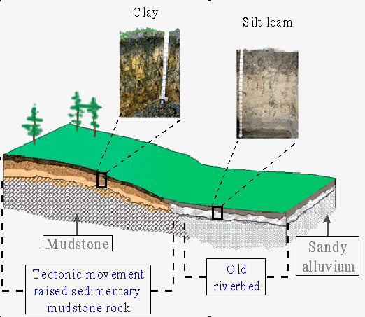 Soil formation topography for Origin and formation of soil