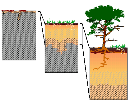 soil features formation sequence and horizons